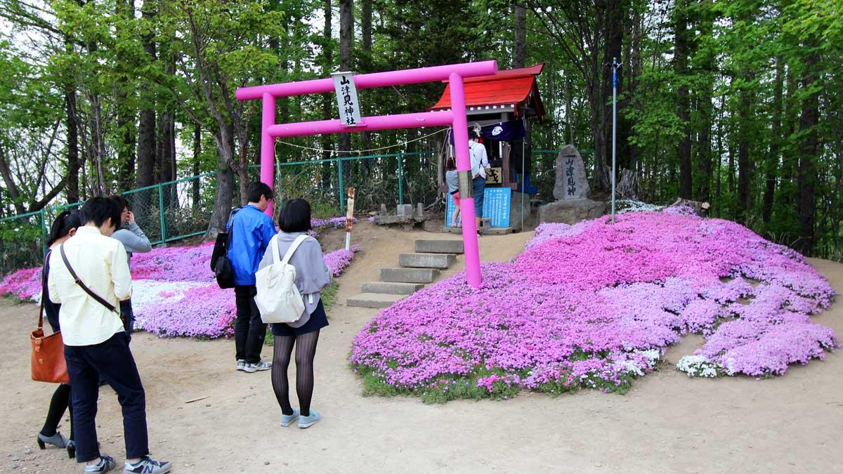 ひがしもこと芝桜公園、山津見神社