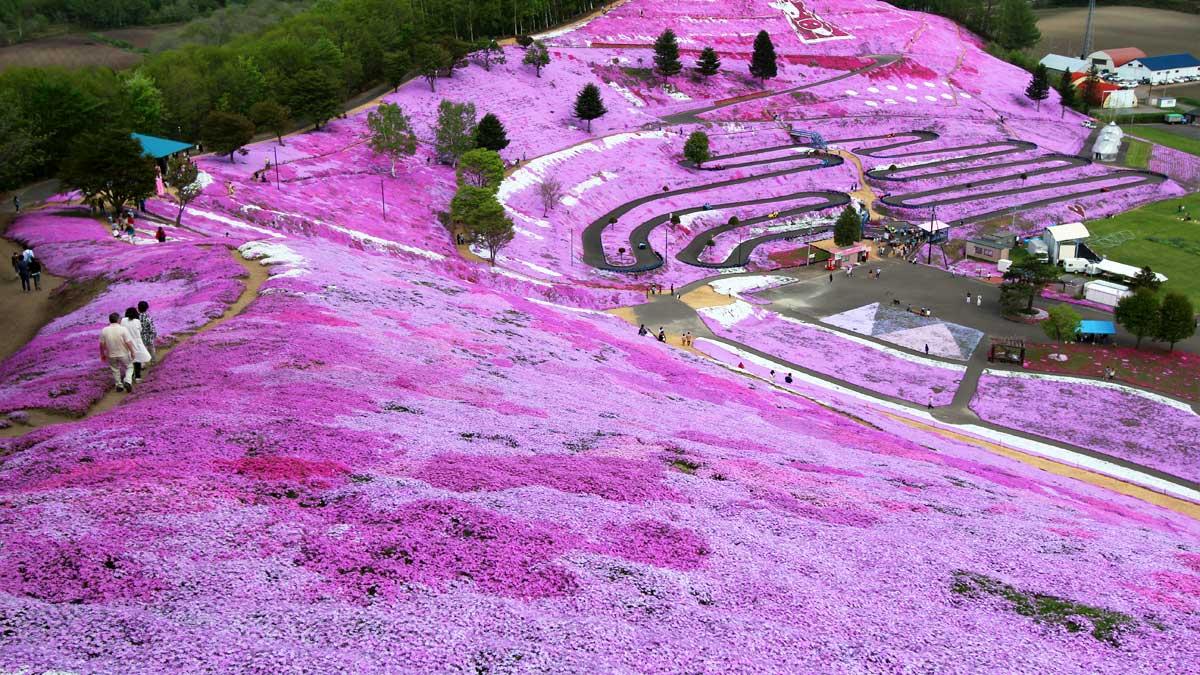 ひがしもこと芝桜公園、丘の上から
