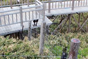 知床5湖高架木道電気柵3重